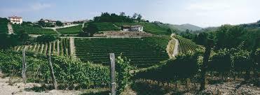 Weinberge von Pelissero