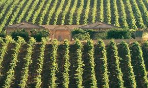 Weinlage bei Ottella