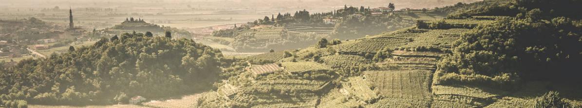 Valpolicella - Amarone Wein