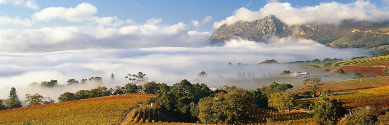 Luddite Wines Western Cape