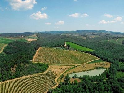 Rebflächen von Brancaia
