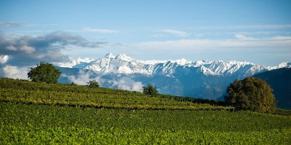 Weißweine aus Südtirol