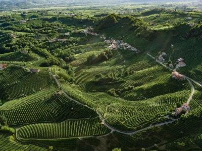 Weingärten von Cartizze