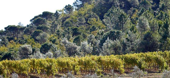 Rosé aus Frankreich und der Provence