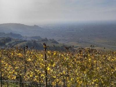 Die Weinberge der Soave Classico DOCG