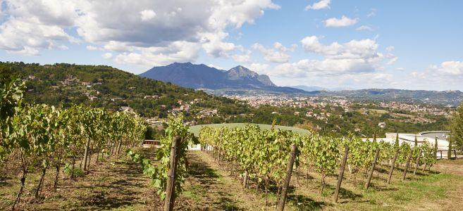 Weinberg mit Blick auf den Vesuv