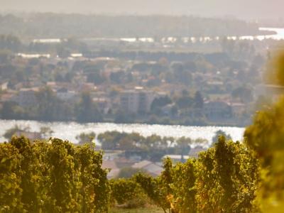 Blick auf die Rhône vom Weinberg