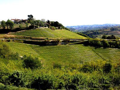Weinberg di  Santo Stefano von Ceretto im Piemont