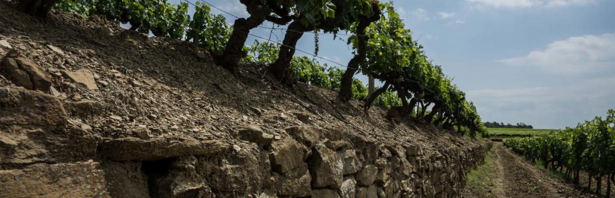 Tenuta Sette Ponti in der Toscana