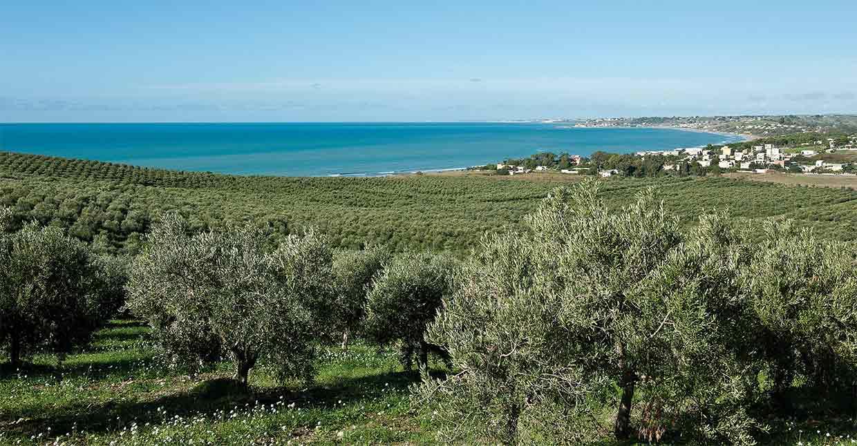 Olivenöl Herkunft