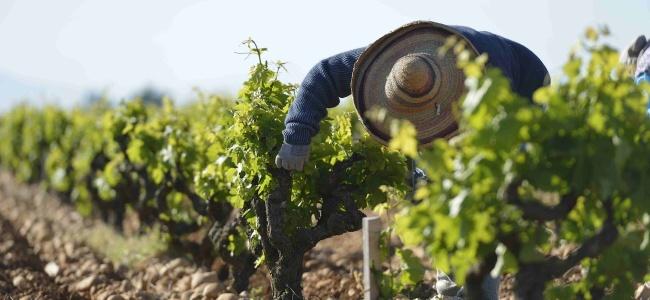 Rotwein aus Frankreich - besser geht's nicht