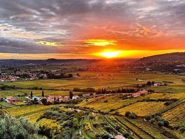 Weingarten von Speri