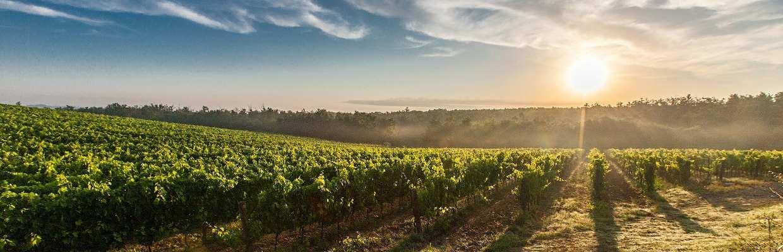 Sieur d'Arques - Languedoc