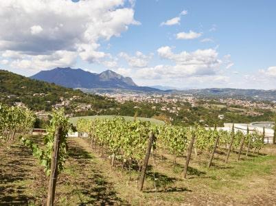 Rebflächen von Villa Raiano bei Irpinia
