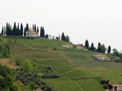 Der Weinberg San Floriano