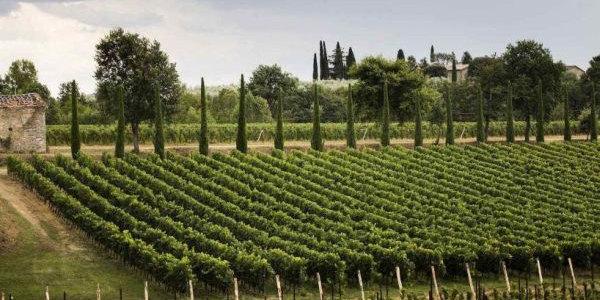 Weingut Orma in Bolgheri in der Toskana