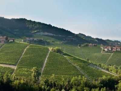 Der Weinberg Mosconi im Piemont
