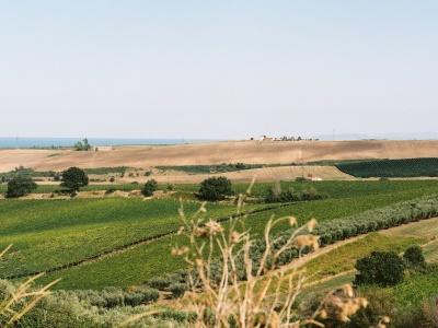 Di Majo Norante - Fokus auf nachhaltige Landwirtschaft