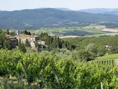 Rebstöcke oberhalb des Castello di Fonterutoli