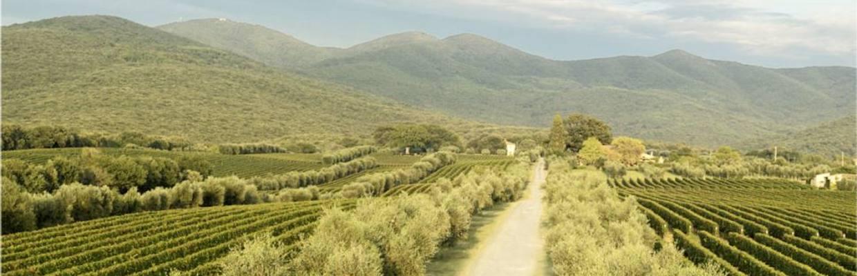 Ornellaia, Bolgheri, Toscana