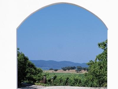 Weinberge von Cortes de Cima