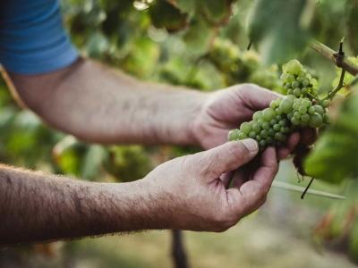 "Für Zeter gilt: ""Right place, right grape"