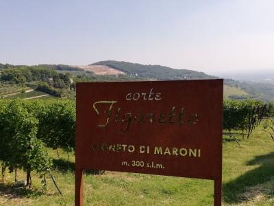 Der Weinberg für den Amarone Maso Maroni