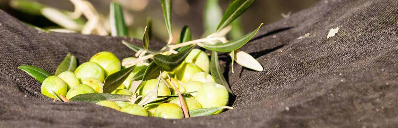feinfruchtig-mildes Olivenöl