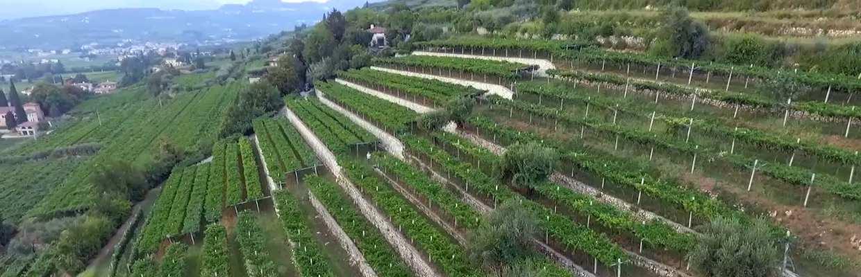 Tedeschi Weigut in Valpolicella