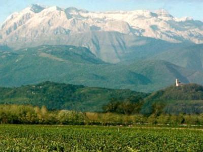 Rebflächen bei Mariano del Friuli