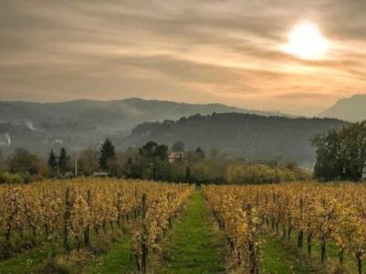 Weinberge von I Favati bei Avellino