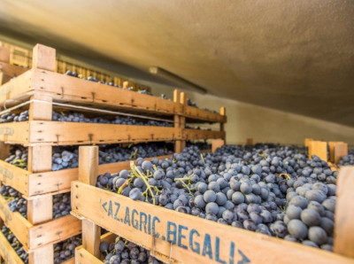Trauben trocknen bei Begali