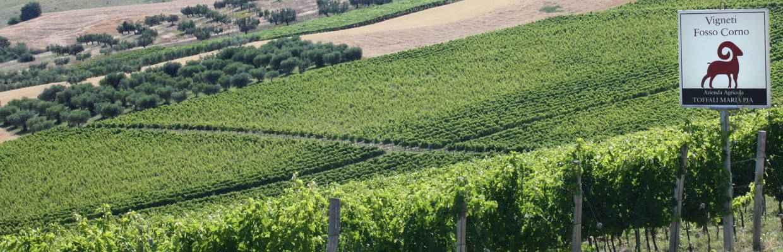 Weingut Fosso Corno Abruzzen