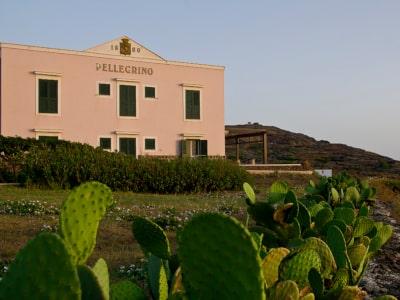 Weine auch von der Insel Pantelleria