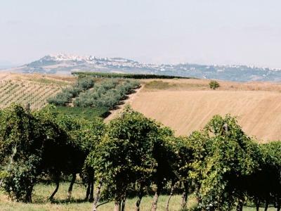 Weinberg von Di Majo Norante
