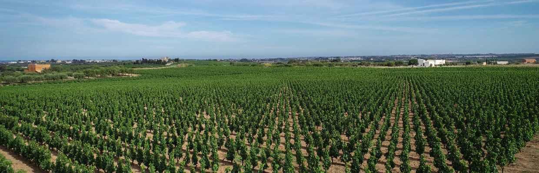 Weingut Feudo Maccari Sizilien