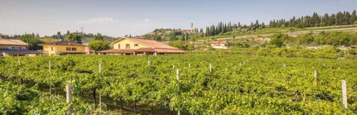 Azienda Agricola Lorenzo Begali