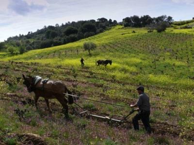 Schonende Bodenbereitung mit Pferd