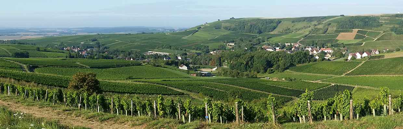 Weinberge in Sancerre an der Loire