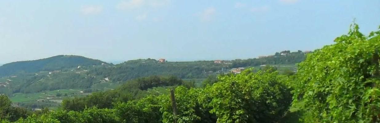 Azienda Agricola Viviani