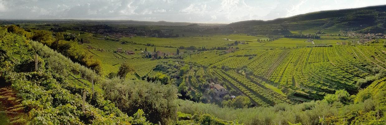 Azienda Agricola Speri