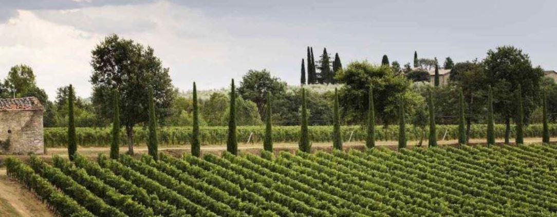 Rosato aus der Toskana und Süditalien