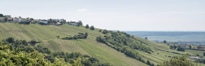 Groszer Wein