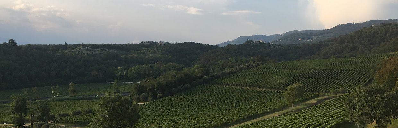 Weingut Puiatti im Friaul