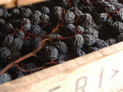 Getrocknete Trauben für Amarone und Ripasso
