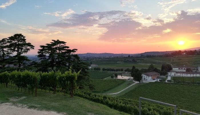 Weingut Bertani Valpolicella - bester Amarone