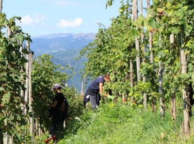 Weinbergarbeit in Valdobbiadene