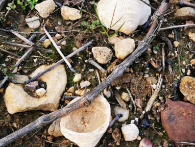 Fossilien im Weinberg