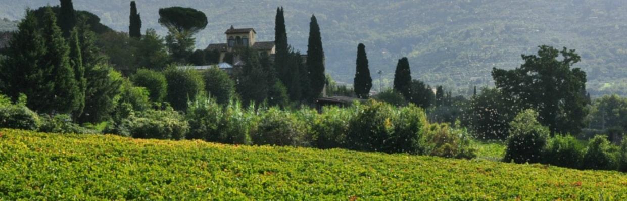 Azienda Agricola Baracchi