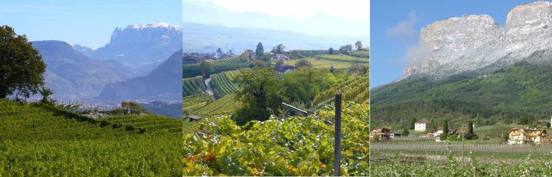 Weingut Abraham in Südtirol
